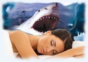 До чого сниться акула: тлумачення снів про морських хижаків різними сонниками