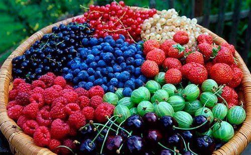 До чого сняться ягоди: загальні тлумачення таких сновидінь