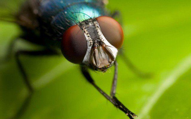 До чого сняться мухи: зверніть увагу на своє здоров`я і чекайте дрібних негараздів на роботі