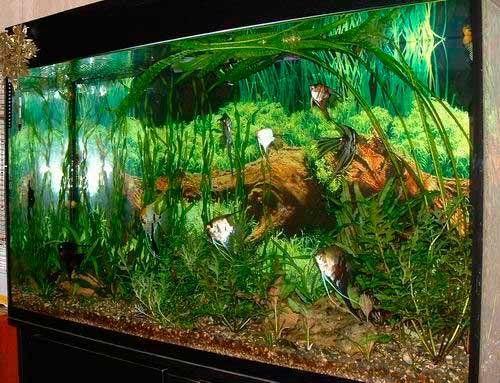 Як зробити акваріум своїми руками: всі тонкощі від а до я