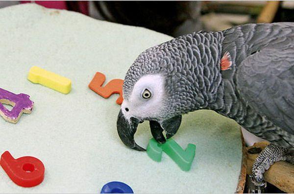 Папуги жако і їх особливості