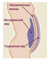 Вісцеральний жир: як позбутися від внутрішнього жиру за допомогою дієти і фітнес-вправ